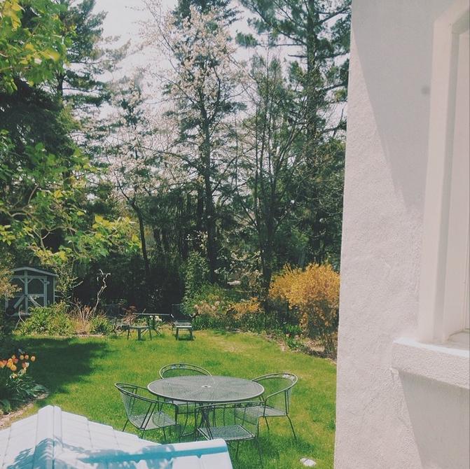 sunny backyard view