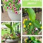 Secret to a Show-Stopping Planter