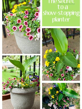 the secret to a show stopping planter