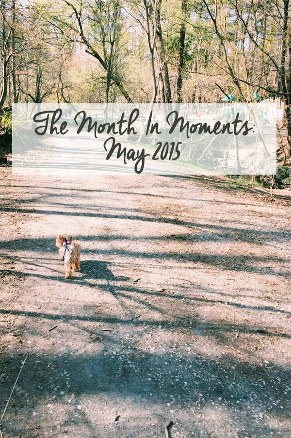The Month in Moments: May 2015 a recap of livinglou.com
