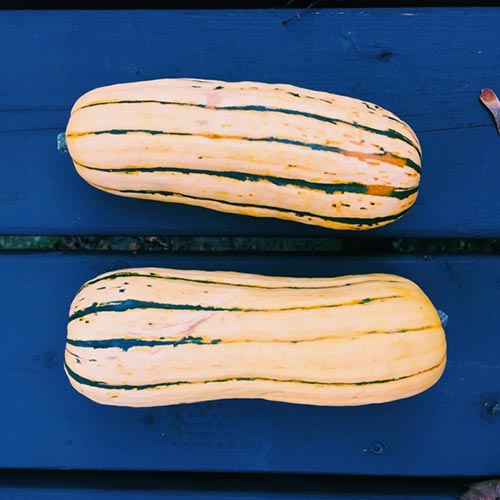 Flavoured with fresh thyme, roasted delicata squash is the perfect and most beautiful side dish for fall. | livinglou.com