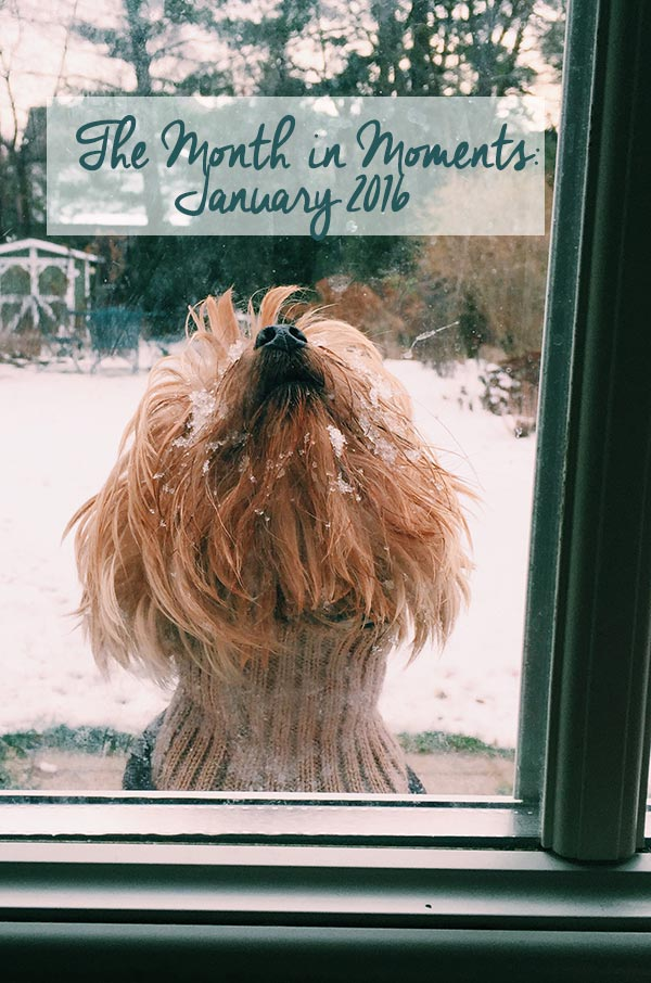 Taking a look back at the month of January 2016. | livinglou.com